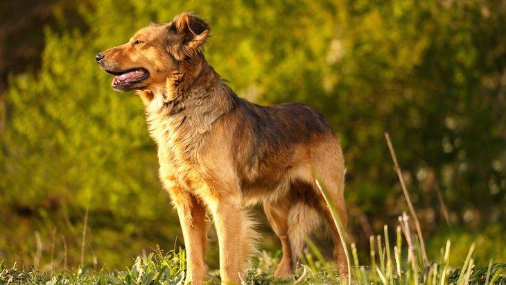 人間との共同作業の能力、オオカミと犬を比べた結果は?【研究結果】