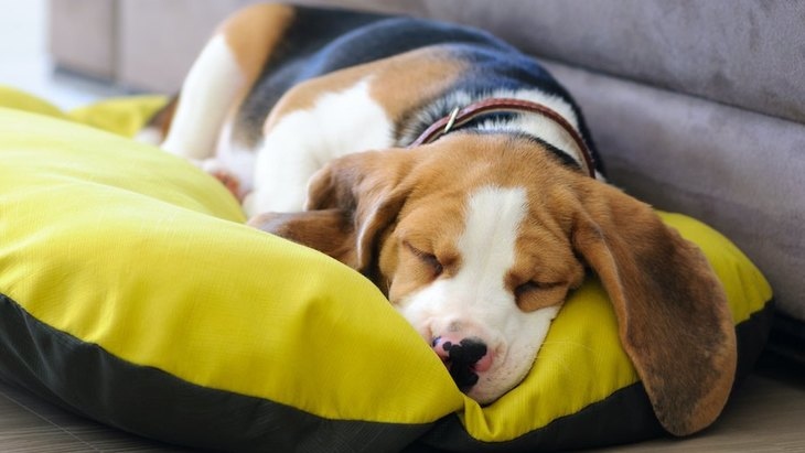 犬も『夢を見る』って本当?一体どんな夢をみているの?