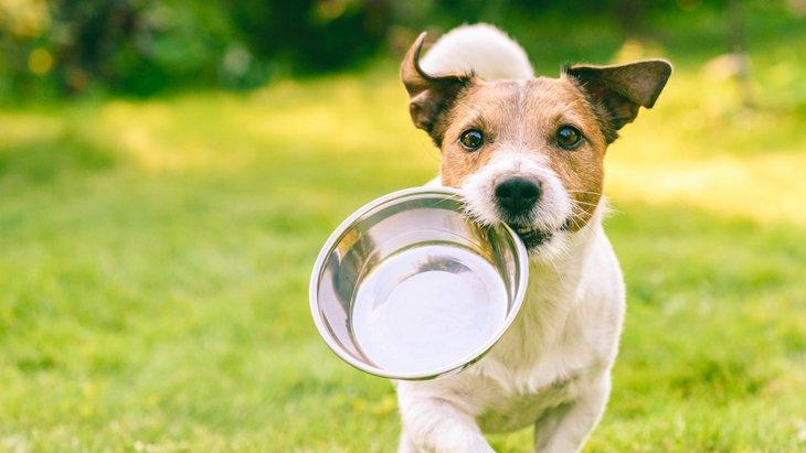 犬に与える水は毎日変えたほうがいいの?
