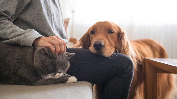 犬の可愛いあざとさについ負けてしまう時5つ