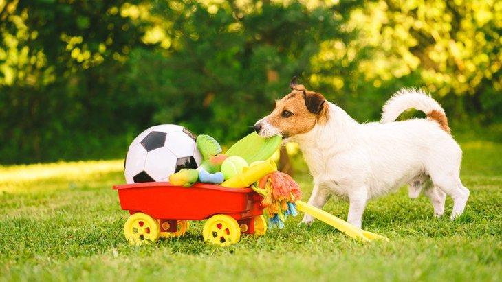 犬が好みやすい『おもちゃ』の特徴とは?3つの選び方と正しい使い方