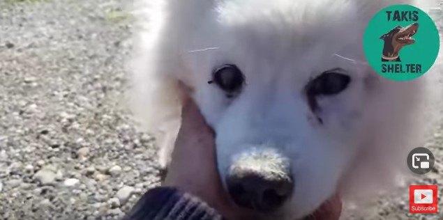高齢で盲目、ガンに冒された犬。保護したその日に飼い主が見つかる!