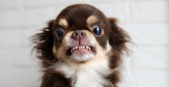 犬が『わがままで唸っているとき』にしてはいけない飼い主のNG行為3選