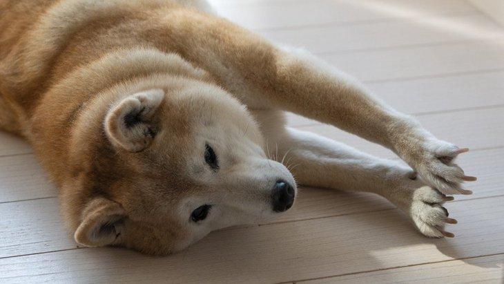 犬から嫌がられないお手入れのコツ3選!どうしても嫌がるときはどうしたらいい?