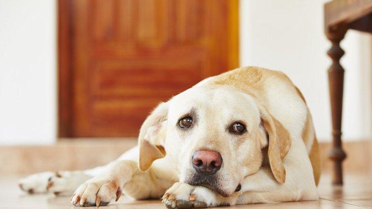 犬が不安に思っていること3つ