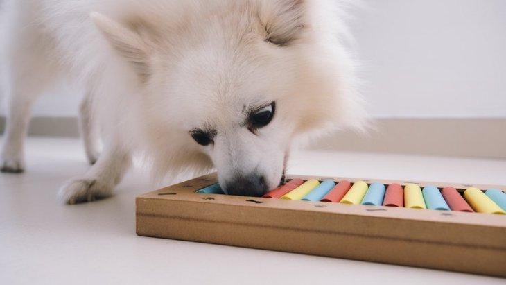 犬に『新しいゲームを紹介する時』のコツが分かる実験結果