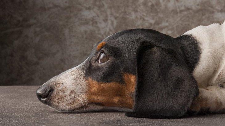 犬の元気が無くなってしまう飼い主の行動5つ