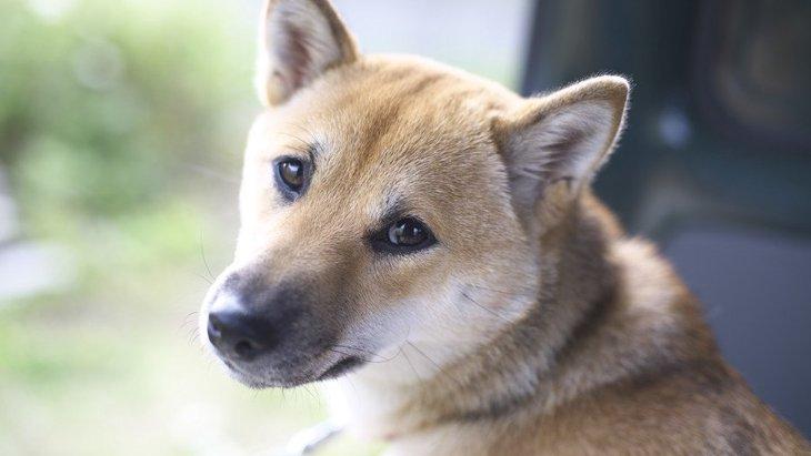 犬が飼い主を見つめる心理4つ