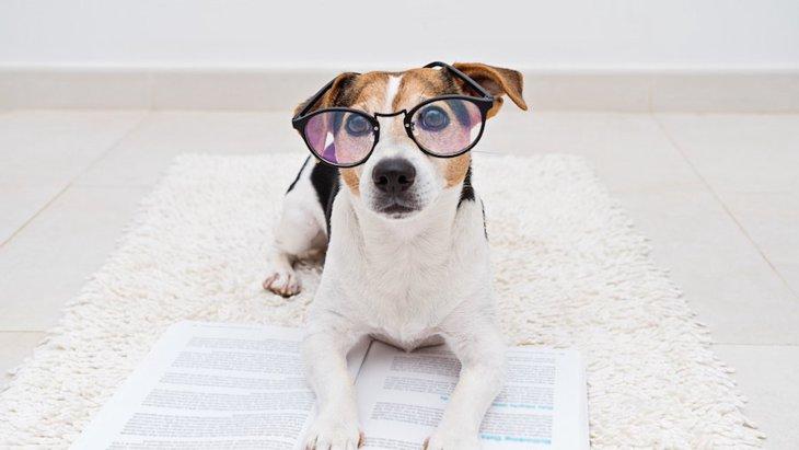 犬の血統書とは?必要性や種類、作る方法から正しい見方まで