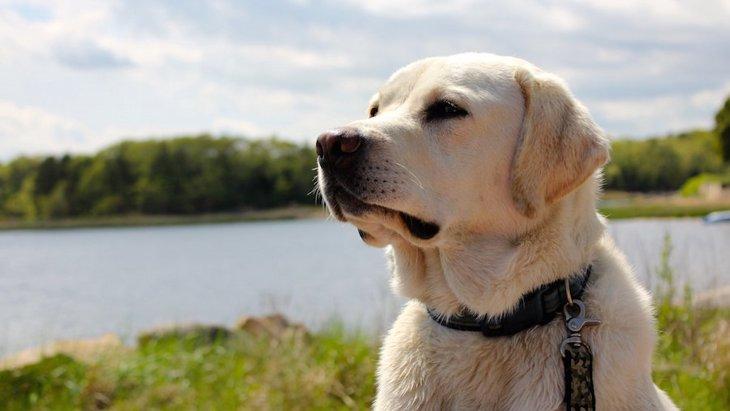 犬はお店の外で飼い主を待っているとき何を考えてる?