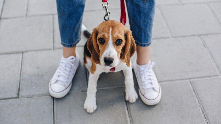 うっかりやってない?絶対NGな『犬の散歩方法』5選