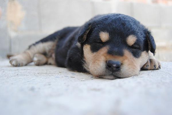 愛犬の名前に姓名判断を利用する飼い主さんの増加中!