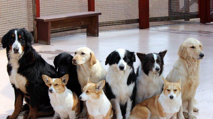 犬の軟便は大病のシグナルだった?考えられる病気をチェック!