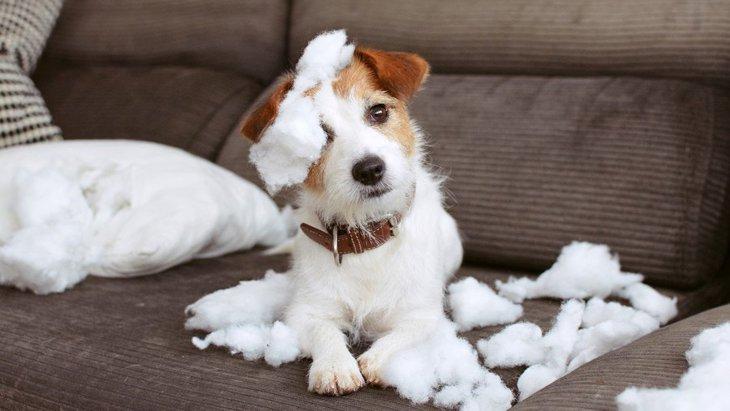 犬が飼い主に隠れてイタズラする時の心理3つ