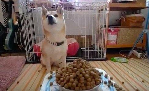『飼い主が壊れたようにドッグフードを注ぎ続けたら?』愛犬に試してみた結果