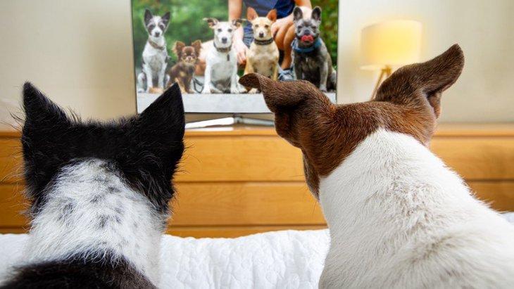 犬の留守番中は電気やテレビはつけておくべきなの?