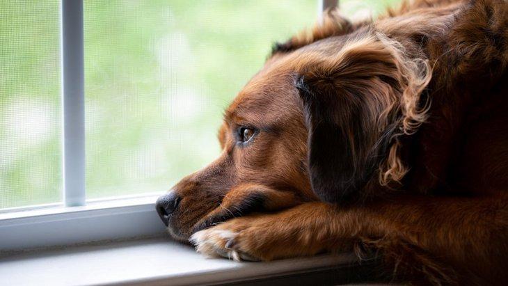 犬が窓の外を見ている時の心理3選