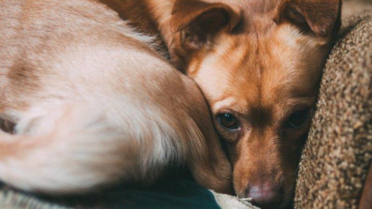 『臆病な性格』の犬がよくする仕草や行動6選