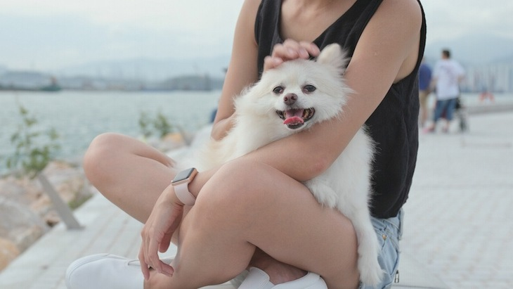 犬を飼って変わった自分の生活7つ