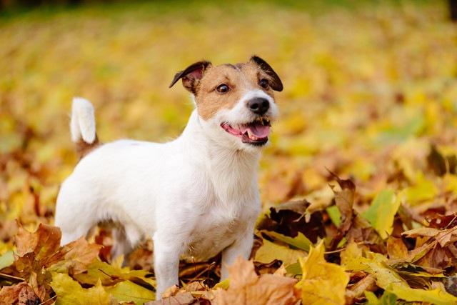 愛犬の『なつき度』を測る5つのチェック項目
