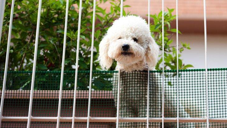 絶対NG!ペット禁止の家で犬を飼うリスク3つ