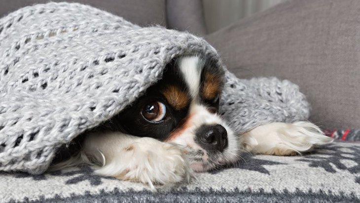 犬にも冷え性ってある?改善法や効果的な食べ物まで
