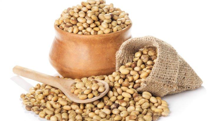 犬は大豆を食べても大丈夫?節分で注意!アレルギーや与え方を解説