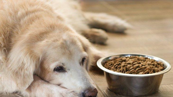 秋に気を付けるべき『犬の病気』4選