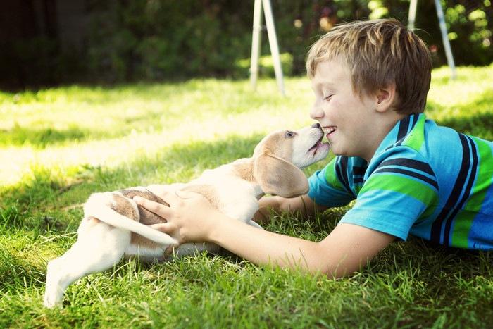 犬伝染性肝炎の原因(感染経路)や症状、治療法