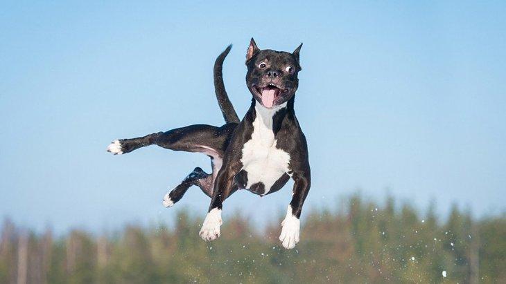 犬が興奮しすぎてしまう時にやるべき3つの対処法