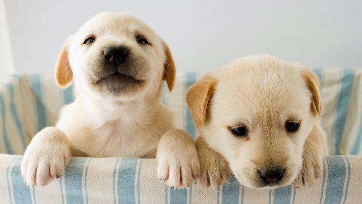 子犬が死亡しやすい『危険な病気』2選