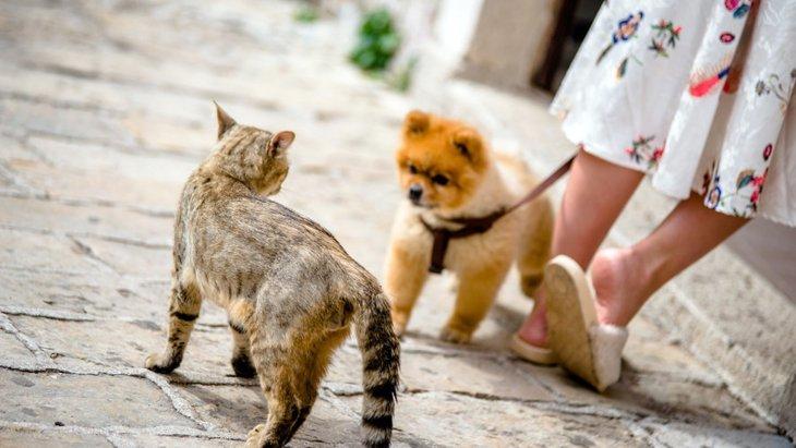 どう見ても最高!犬と猫の仲良し写真14選!
