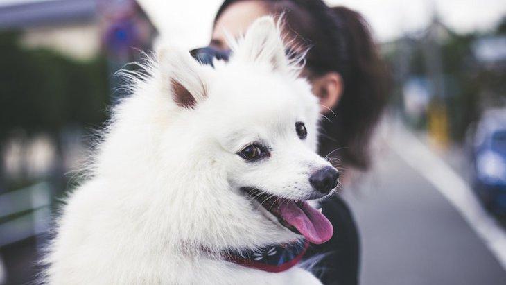 愛犬を抱っこしすぎるのは良くないこと?