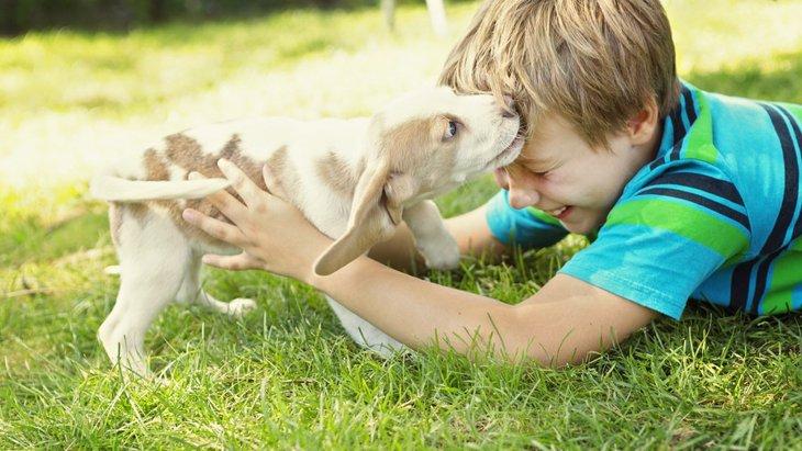 思春期の子供が犬を育てる4つのメリット