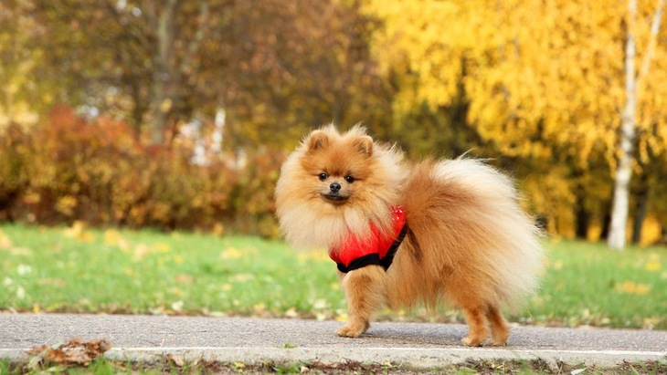 犬の飼育にかかる毎月の支出額はどのくらい?緊急時にかかるお金まで