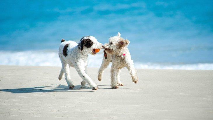 夏に多い犬の病気5選