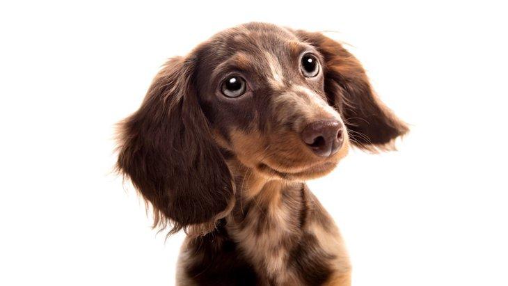 犬の嗅覚はどのくらい?鼻の造りから人間との比較まで