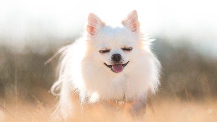 あるある♡犬がよくする『おちゃめな仕草・行動』8選