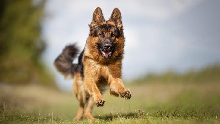 盲導犬サーブの感動の物語!法律を変えた功績とおすすめ本の紹介