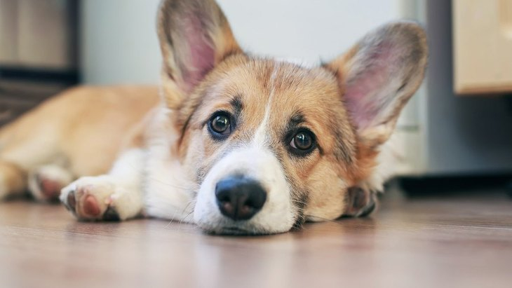 犬にとっては苦痛でしかないNG行為11個