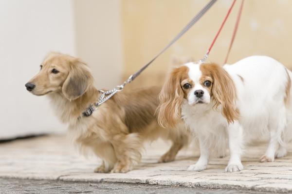 犬の散歩代行はドッグウォーカーにお任せ!