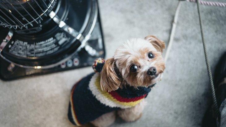 室内犬を飼っている人が絶対にするべき『冬を快適に過ごす対策』6選