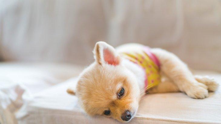 犬が春に体調を崩す6つの原因とやりたい対策