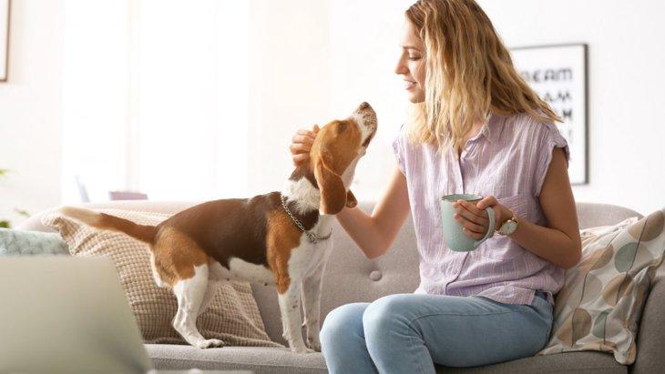 犬にNGな『愛情表現』があるって本当?4つの間違い行動を解説