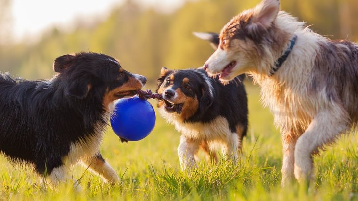 犬が『興奮している』時の適切な対処法4選!やってはいけないNG行為とは?