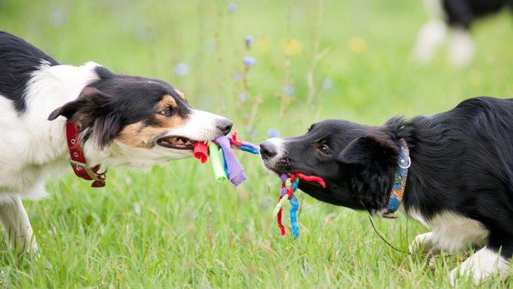 犬用ロープおもちゃのおすすめ商品!人気ランキングBEST5