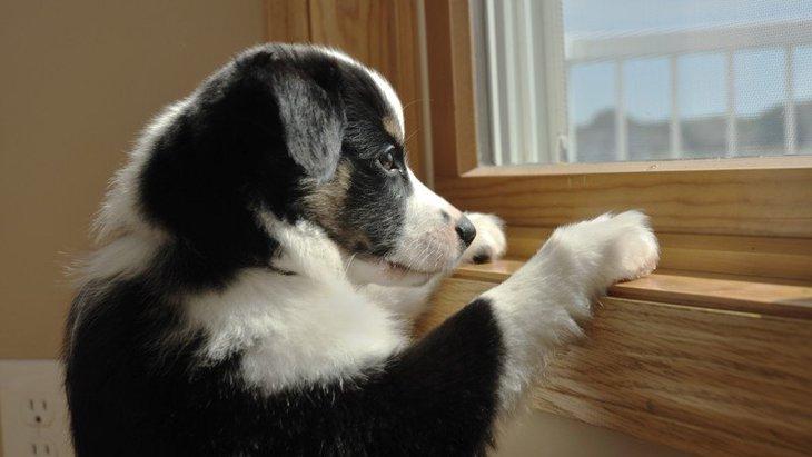 犬を留守番させるときに部屋は明るくしたほうがいい?