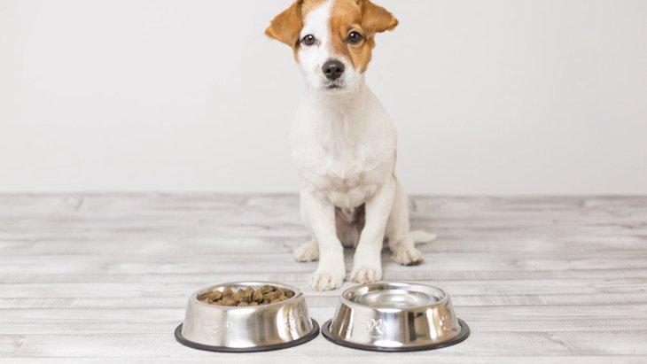 犬にNGな『食器』の特徴4つ!こんな食器には気を付けて!