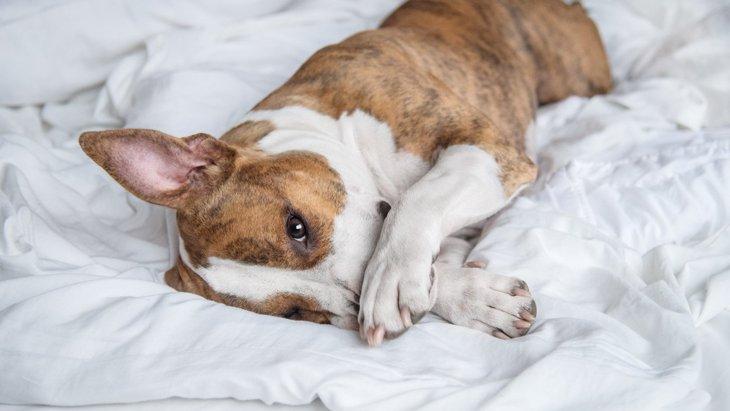 犬の『気象病』とは?気圧の変化がもたらす身体への悪影響5選と予防法!