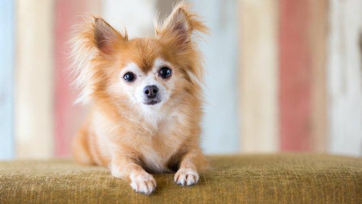 犬が体を痛めている時に見せる仕草5つ